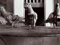 Palomas-con-camaras-antes-Google-Earth-1900